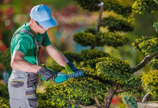 Korzenie, gałęzie, drzewa i owoce na nieruchomości oraz gruncie sąsiednim